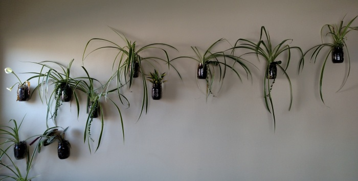 Julia Dziuba creates a natural wall display with mason jars